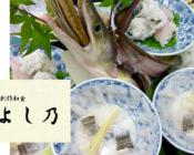 淡路島 鱧(ハモ)【和匠 よし乃】